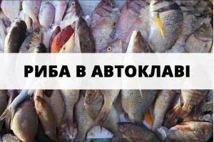 Цікаві рецепти риби